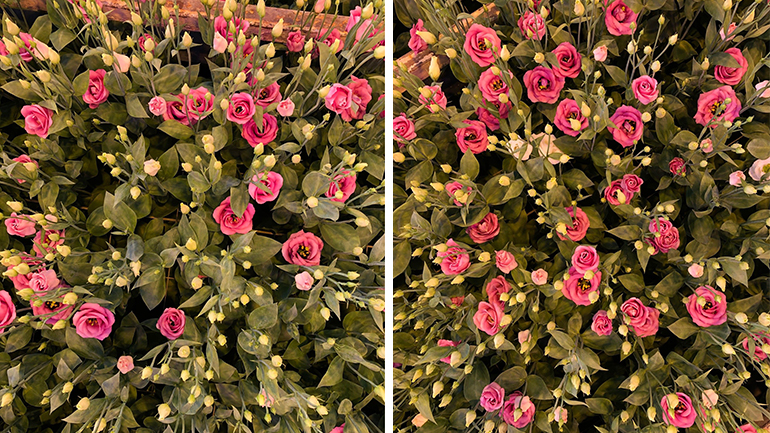 Nano trace elements create stronger and healthier plants