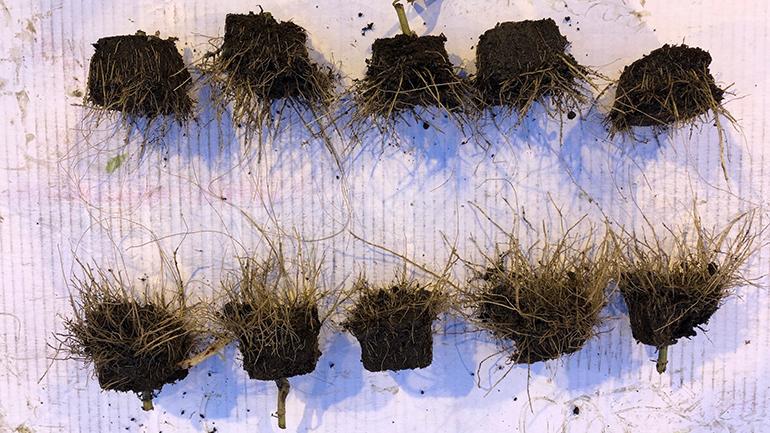 Nano sporen elementen vergroten de oogst per vierkante meter